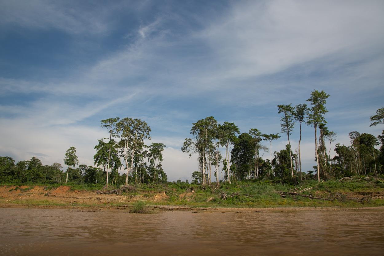 Jungle En Allant Vers Le Coeur De Taman Negara