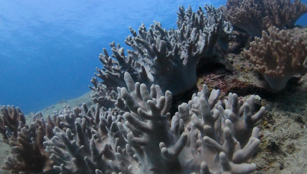 Récif De Corail Aux Perhentians