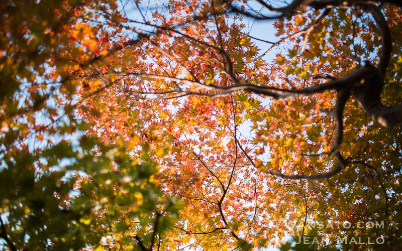 Portfolio - Autumn